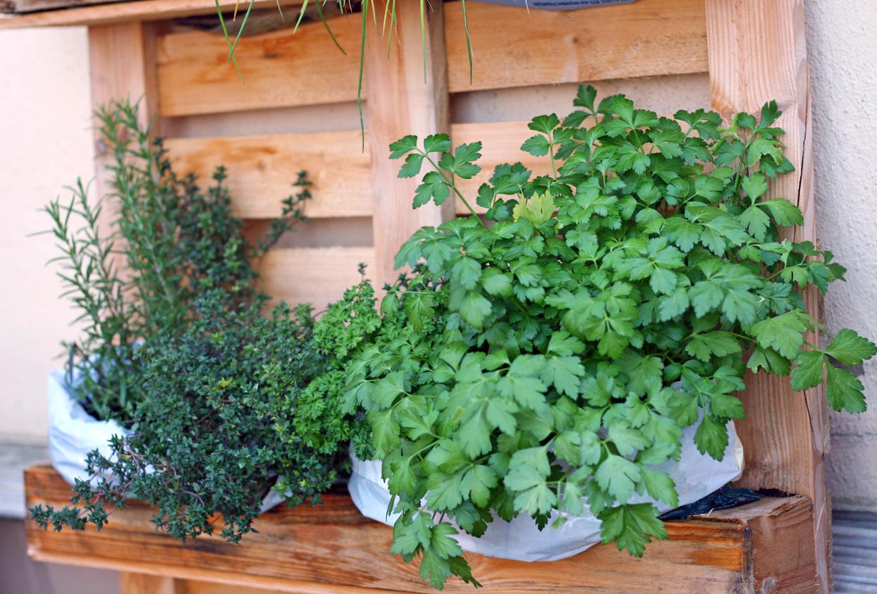 plantas en plataforma