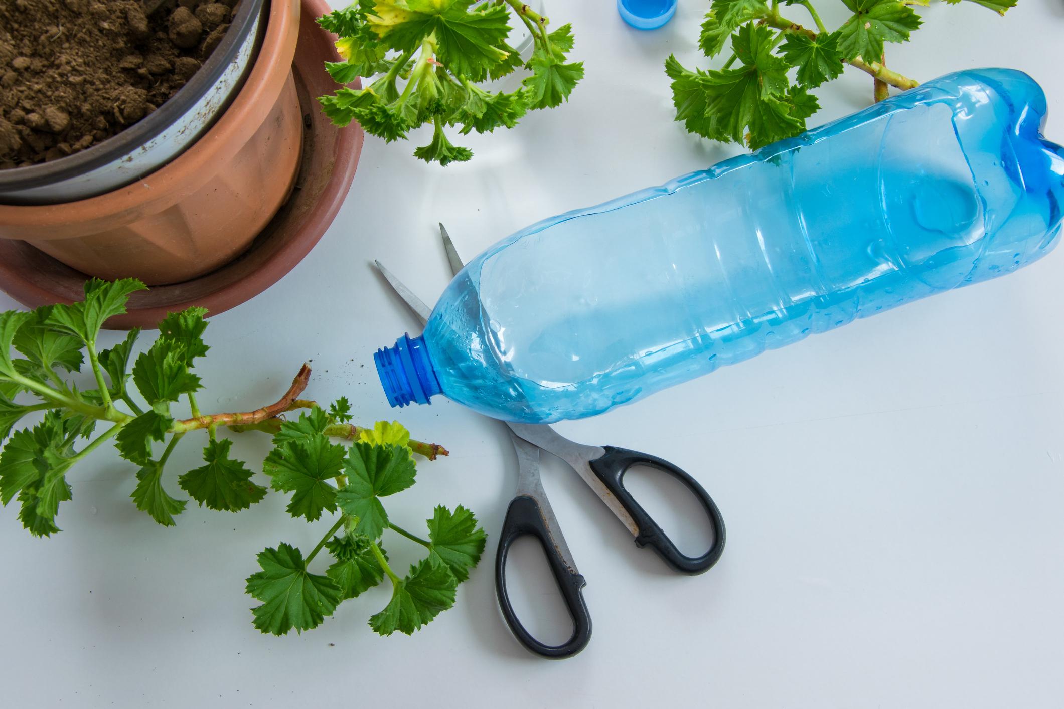 invernadero con botellas